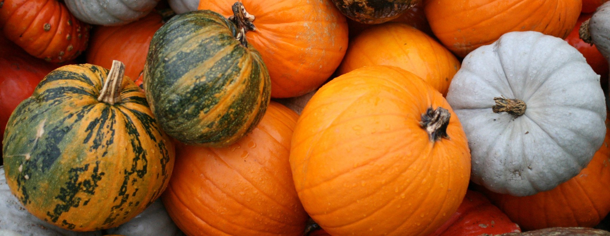 Pumpkins for Truxton's Pumpkin Cheesecake